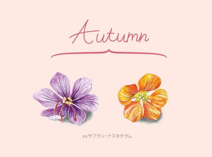 秋のエディブルフラワー